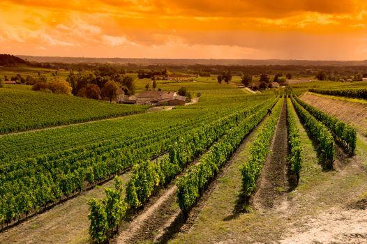 Vineyard Sunrise-Vineyards of Saint Emilion, Bordeaux Vineyards