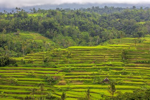 Beautiful rice terrace fields in Bali Indonesia