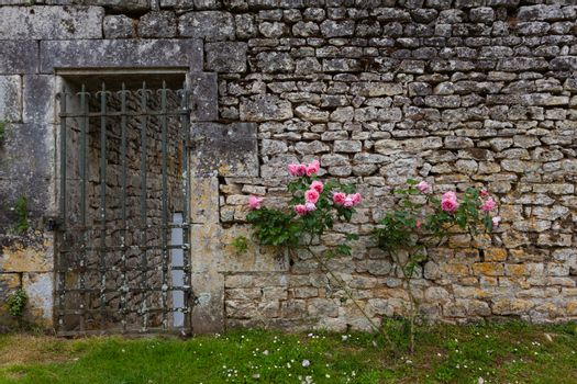 Roses on stoned wall  along with grilled garden gate Charente maritime, France