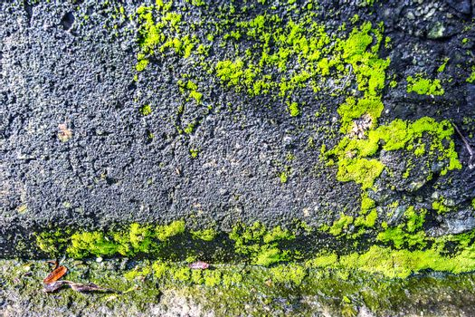 Old stone wall background with moss and lichen