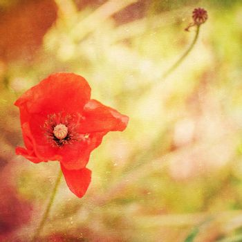 Grunge paper background with bright red poppy