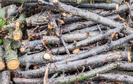 Pile of felled cherry branches