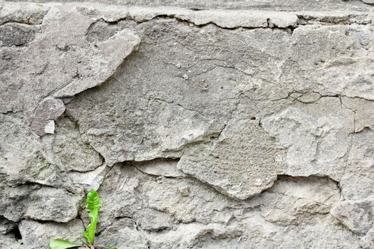 Sprouts on background wall cement