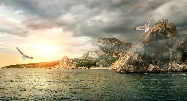 Seagull over the sea