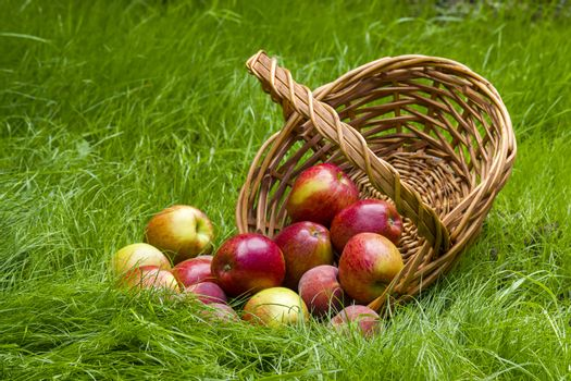 fruits in a basket in summer grass