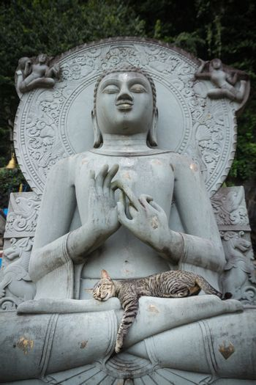 Cat sleeping on the lap Buddha statues.