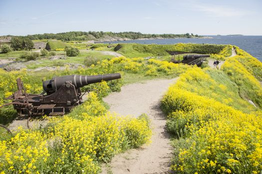 canons and rapeseed on the fortification island suomenlinna