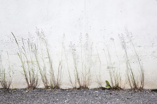 flowering grass against concrete wall