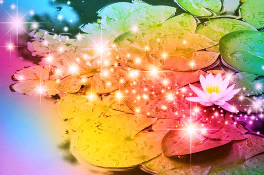 Waterlily Over Bright Multicolored Star Bright Background