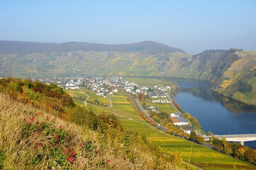 Moselle valley with Piesport