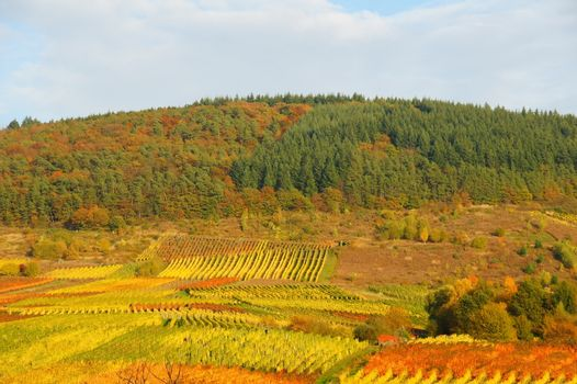 Forest and vineyards