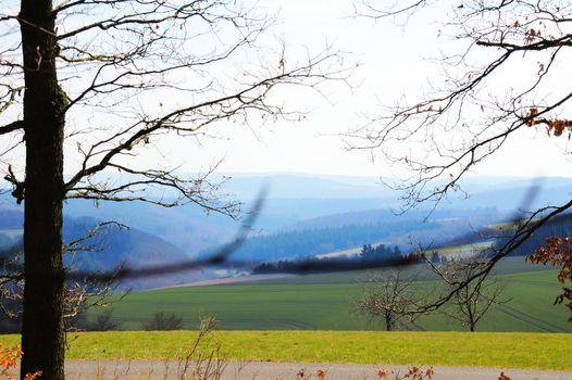 forest landscape in the Hunsrück