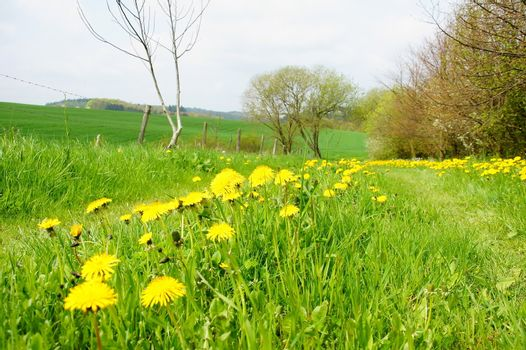 green spring landscape with lane