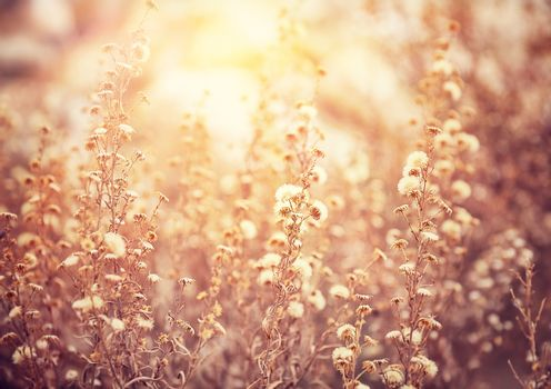 Beautiful floral field
