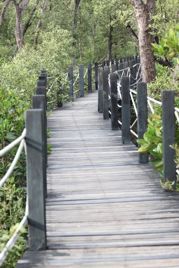 Mangrove forest wooden walkway for nature tourism.