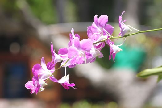 Purple orchid on tree in the garden.
