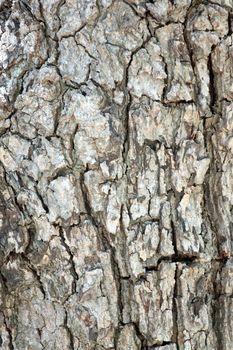 Rough surface of bark tree in macro.