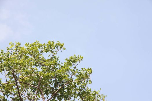 The Green trees on blue sky background.