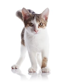 The kitten costs on a white background.