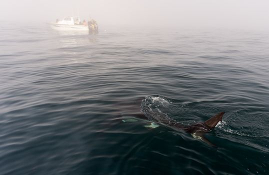 Shark fin above water