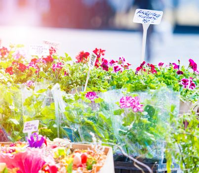 Flowers in shop