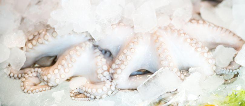 fresh octopus on ice