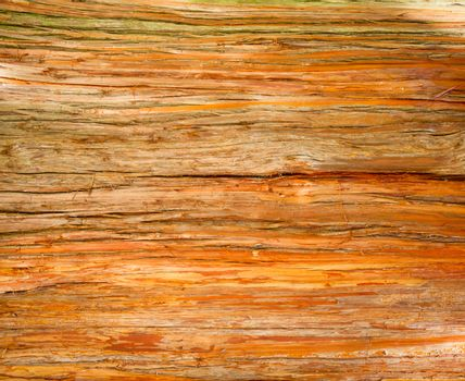 Rustic wood surface