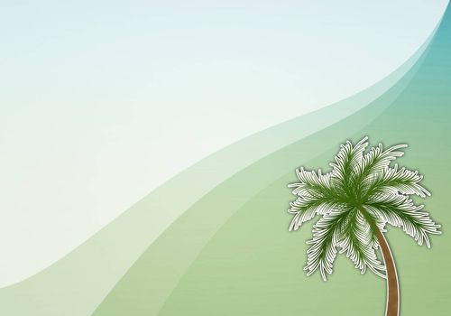 Palm for summer background