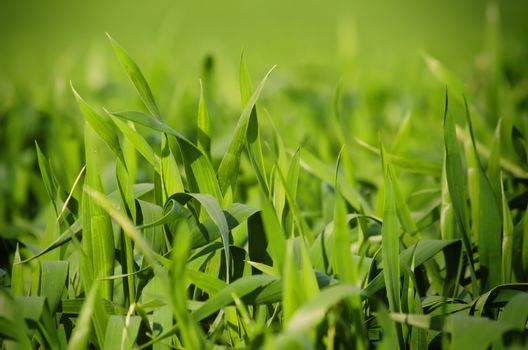 Photo of Spring Green Vitality Grass