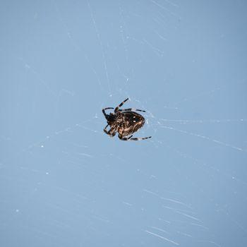 Single Spider Over Blue Sky