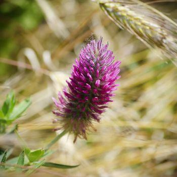Spring or Summer Flower Over Natural Background