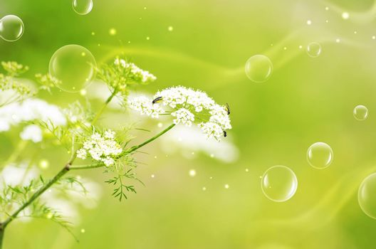 Green Natural Mood With Abstract Bubbles and Copyspace