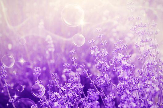 Magic Abstract Purple Lavender Blossom Field