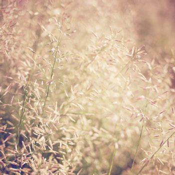 Dry meadow flowers with retro filter effect