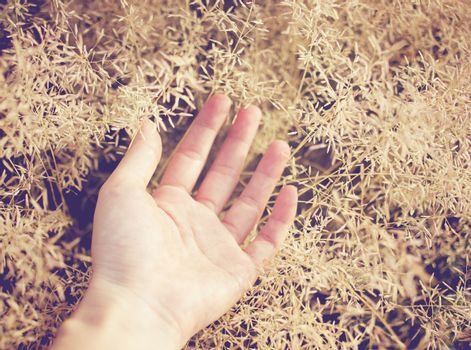 Hand on autumn grass with retro filter