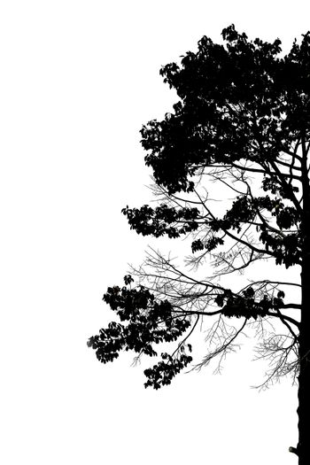 Silhouette of trees on white background.