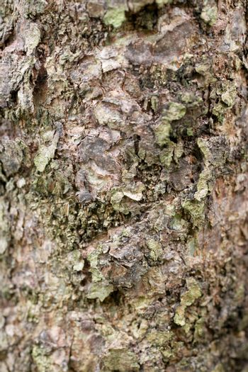 Surface of forest tree for  not smooth background.