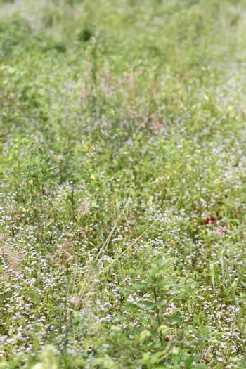 Colorful flower of grass meadow for natural background.