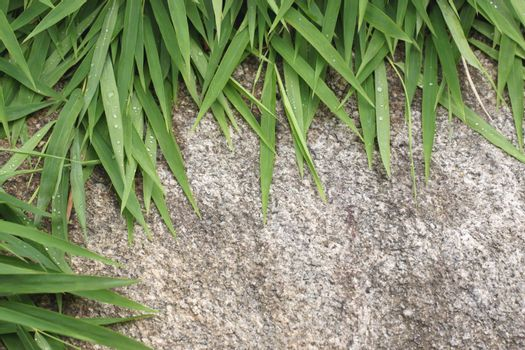 Green leaves of bamboo on the textured stone background.