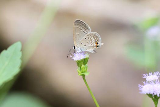 brown butterfly on the flower in garden.