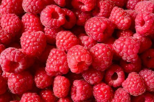Beautiful Red Summer Background of Ripe Raspberries