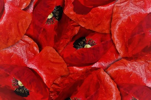 Photo of the Red Poppy Flower Background