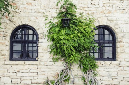 Old Stone Wall With Windows and Greenery