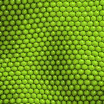 reptile skin background