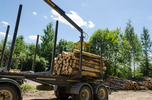 hydraulic crane loading cut forest logs in pile on trailer in summer time