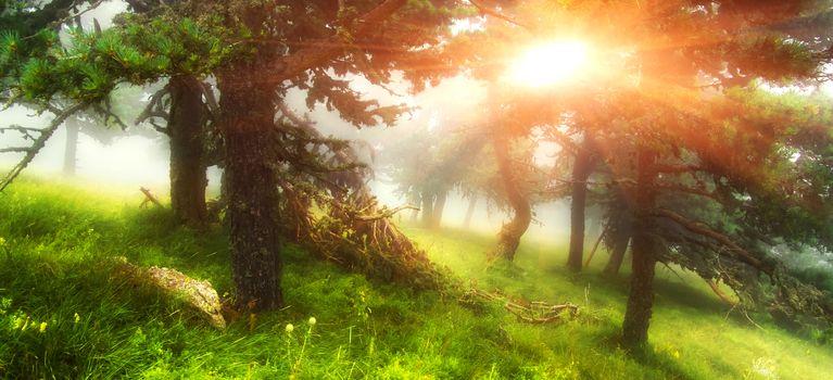 Sunlight in summer forest