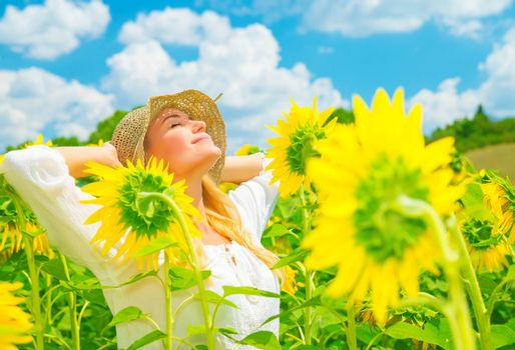 Enjoying sunflower field