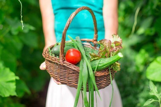 Close-up of a basket greens in woman's hands