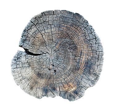 isolated old wood texture