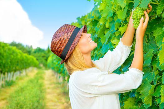 Woman pluck grape